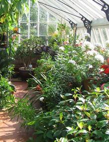 Greenhouse Gardening Tips for Beginners