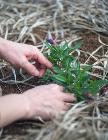 13 Ways to Make Money from Your Garden